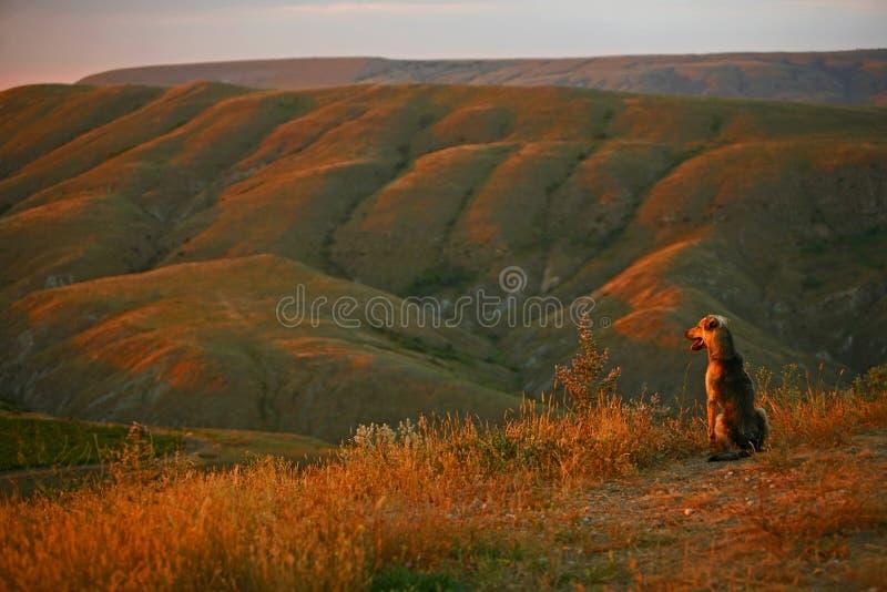 Hunden ser solnedgången arkivbilder