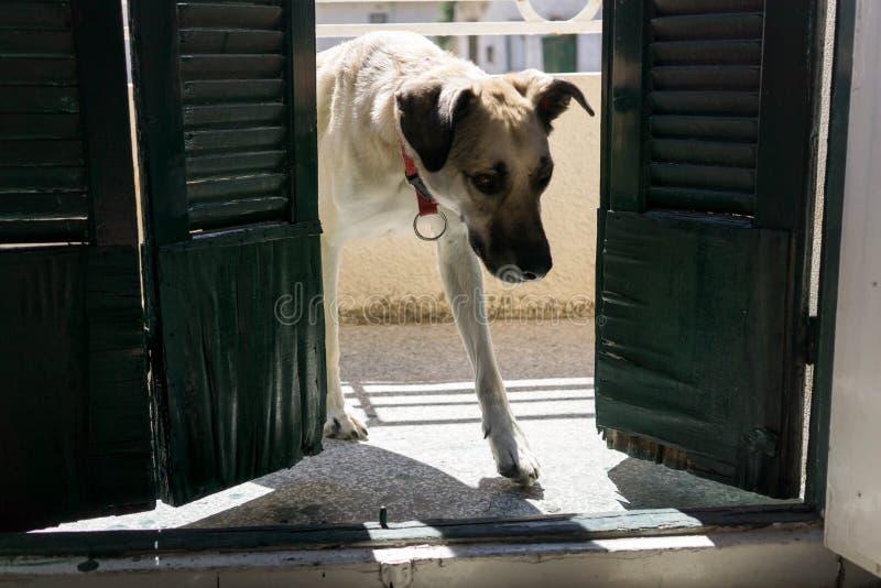 Hunden skriver in rum royaltyfria foton