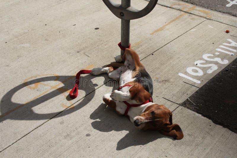 Hunden som väntar på, väljer upp royaltyfria bilder