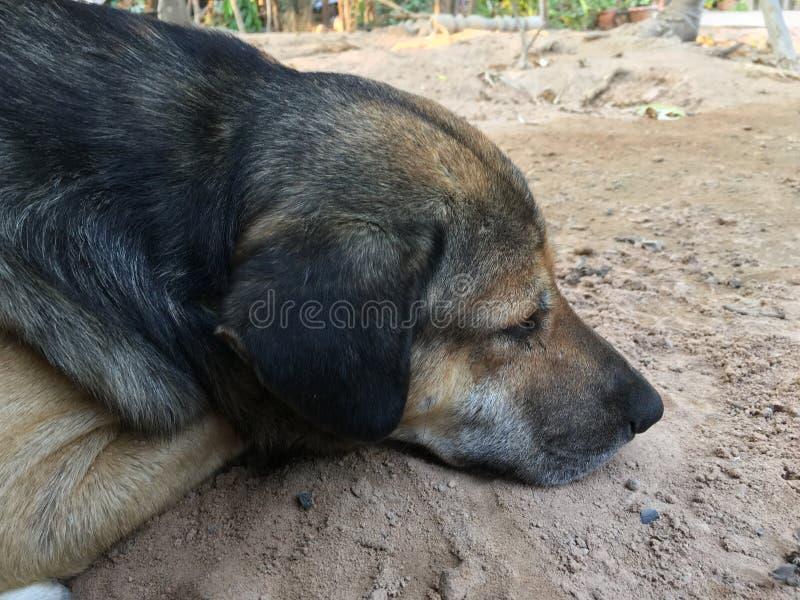 Hunden sov på en varm dag royaltyfria bilder