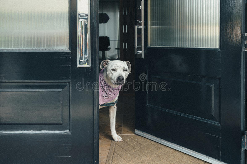 Hunden svarar ytterdörren royaltyfria bilder
