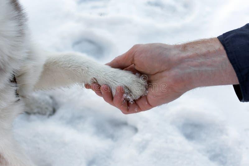 Hunden tafsar i en mänsklig arm arkivbilder