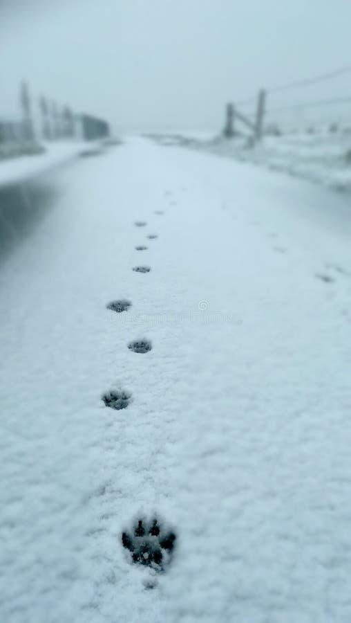 Hunden tafsar i snön arkivbilder
