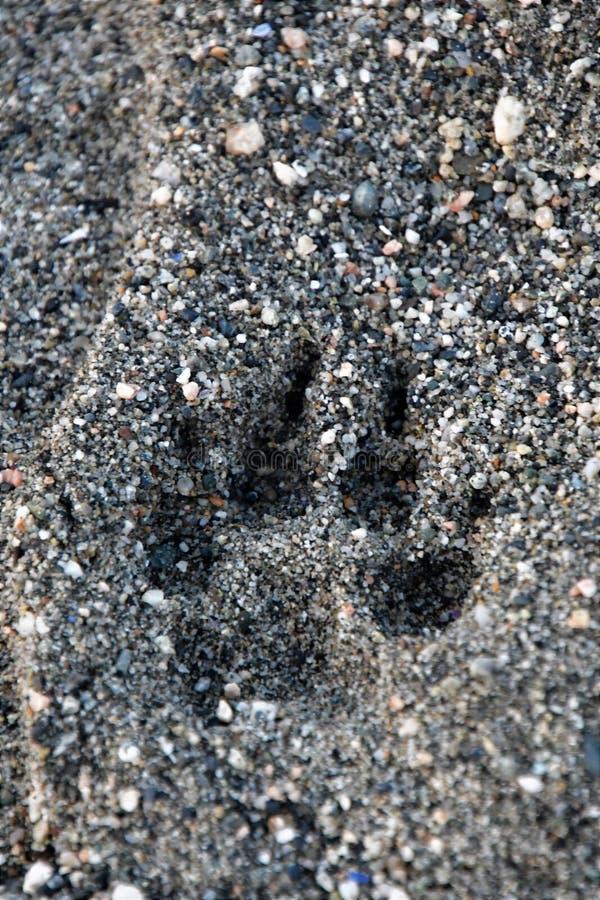 Hunden tafsar trycket är på stranden arkivfoton