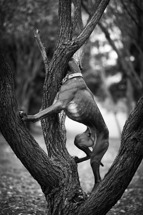 Hunden tog trädformen royaltyfria bilder