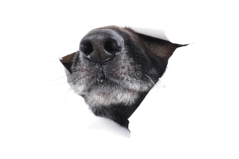 hunden tystar ned royaltyfri foto
