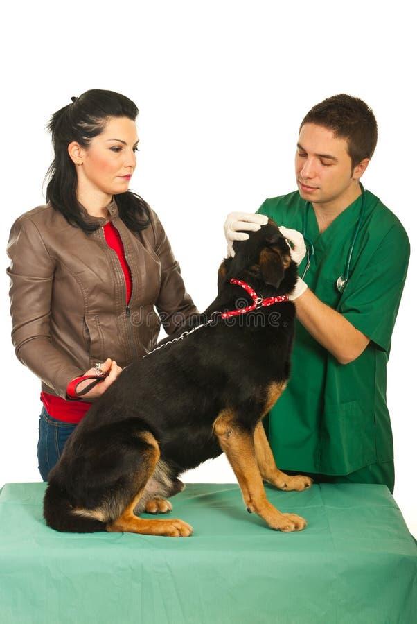 hunden undersöker veterinär- royaltyfria bilder
