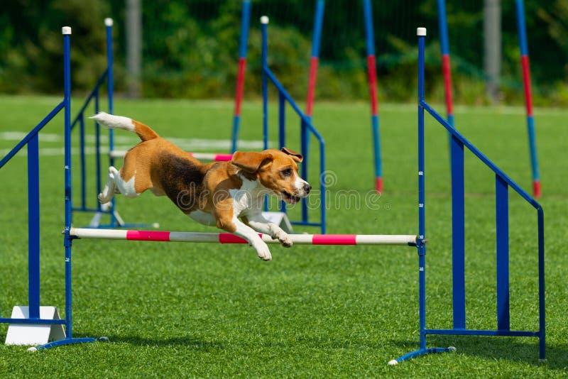 Hunden utför på vighetkonkurrens field treen Naturljus royaltyfria bilder