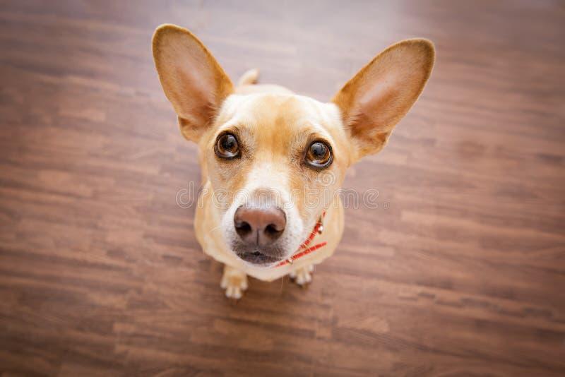 Hunden väntar på ägaren royaltyfria bilder