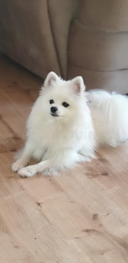 Hunden vilar royaltyfri bild