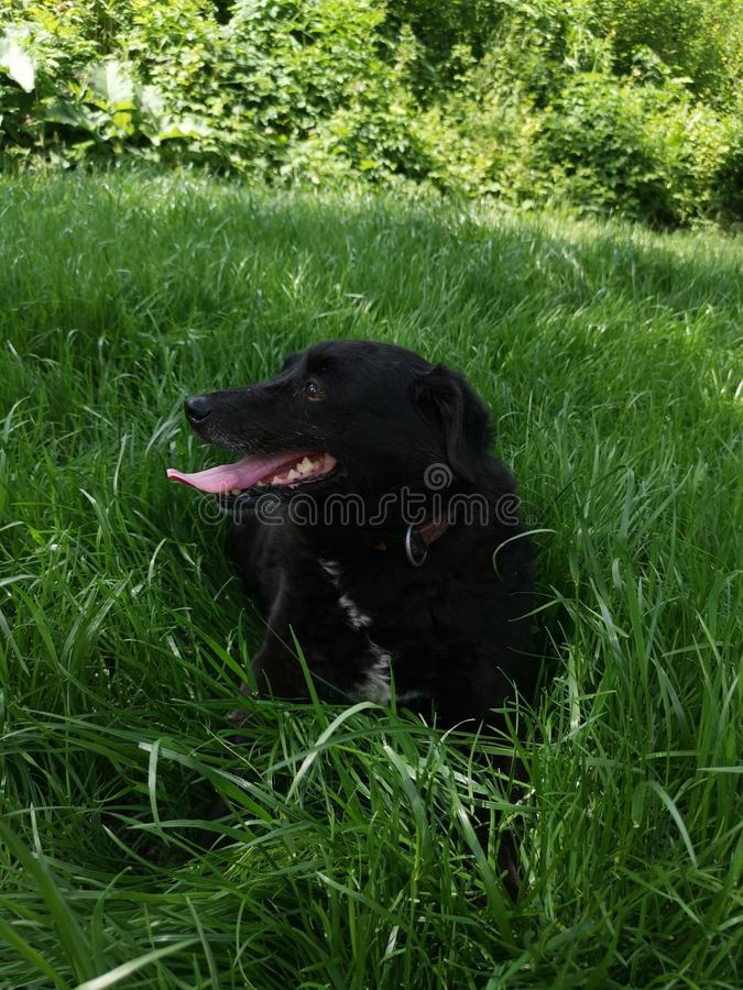 Hundenatur im Gras lizenzfreie stockfotos