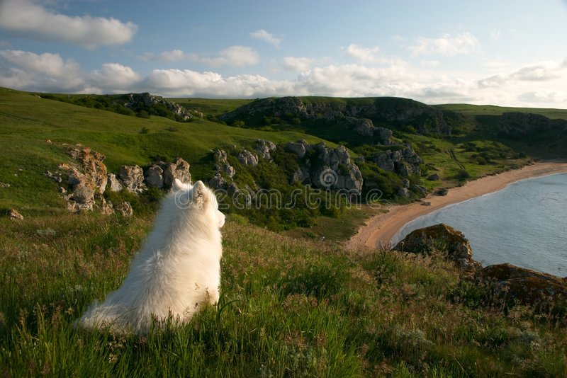 Hundensling Royaltyfri Bild