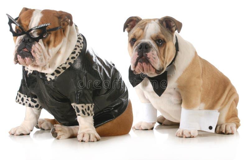 Hundepaare lizenzfreie stockbilder