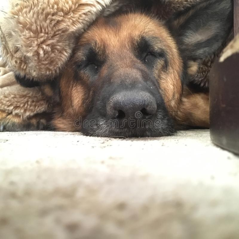 Hundeparadies stockbilder