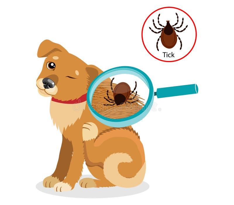 Hundeparasiten Tick On Dog In The-Pelz als Abschluss herauf Vektor der linearen Wiedergabe Verbreitung der Infektion lizenzfreie abbildung