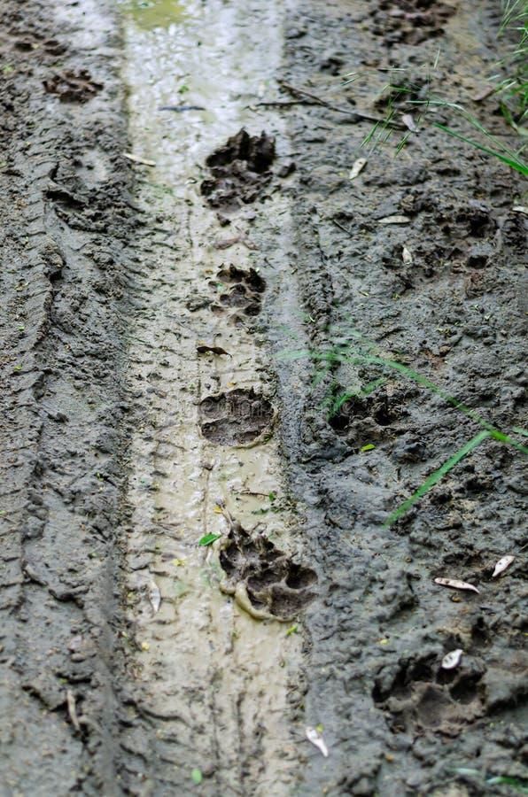 Hundepfotenabdrücke auf einem Schotterweg Bahnen von Hunden im Schmutz einer Landstraße nach Regen Von oben bis unten schie?en lizenzfreie stockfotos