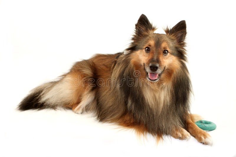 Hundeportrait lizenzfreie stockfotografie