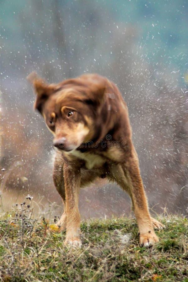Hunderütteln lizenzfreies stockbild