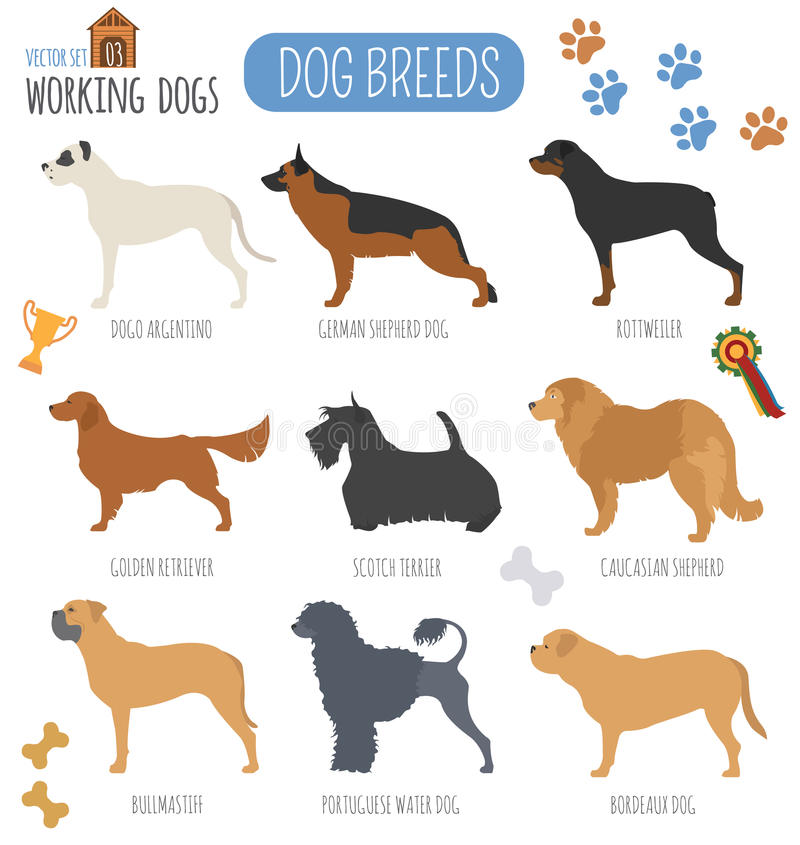 Hunderassen Arbeitende (aufpassende) Hundegesetzte Ikone Flache Art vektor abbildung