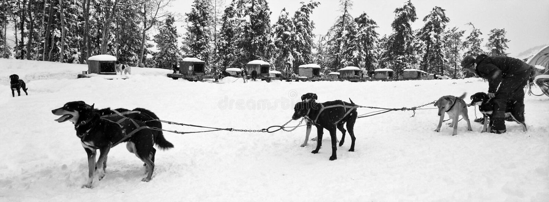 Hundeschlitten-Team stockbilder