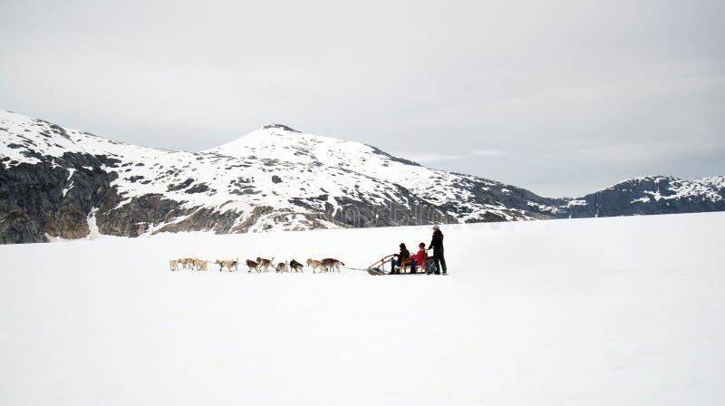 Hundeschlittenfahrt auf Toboggan an Alaska-Gletscher lizenzfreie stockfotografie