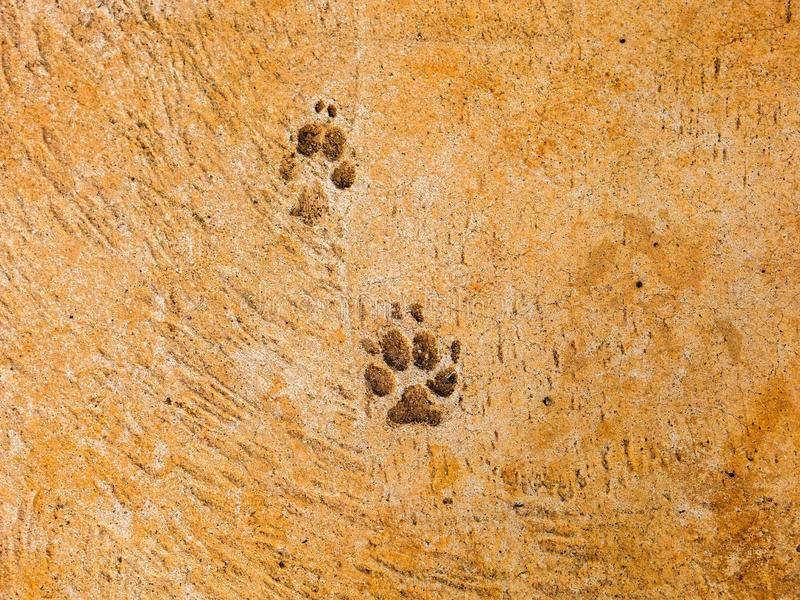 Hundeschritte auf Zementboden - semiotische Indizes stockbilder