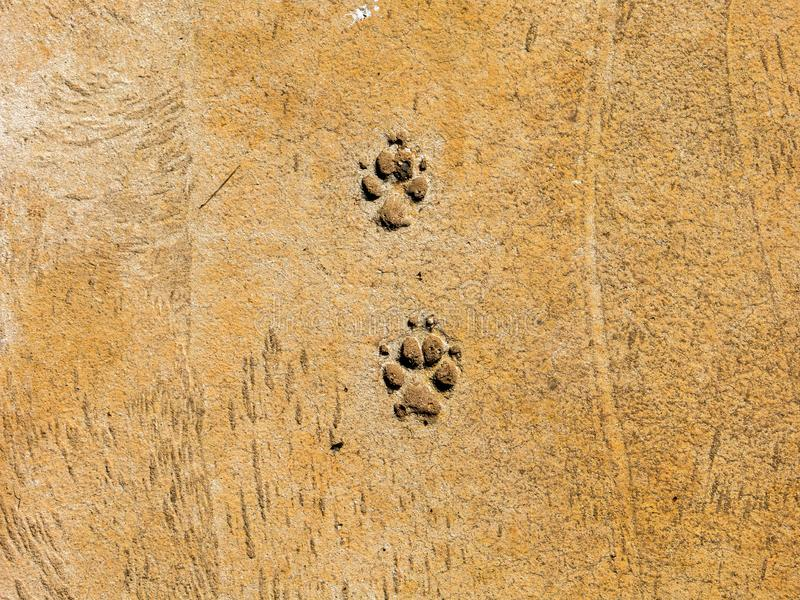 Hundeschritte auf Zementboden - semiotische Indizes lizenzfreies stockbild