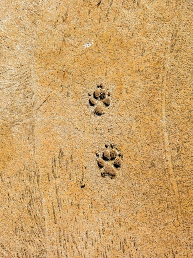 Hundeschritte auf Zementboden - semiotische Indizes lizenzfreie stockfotografie