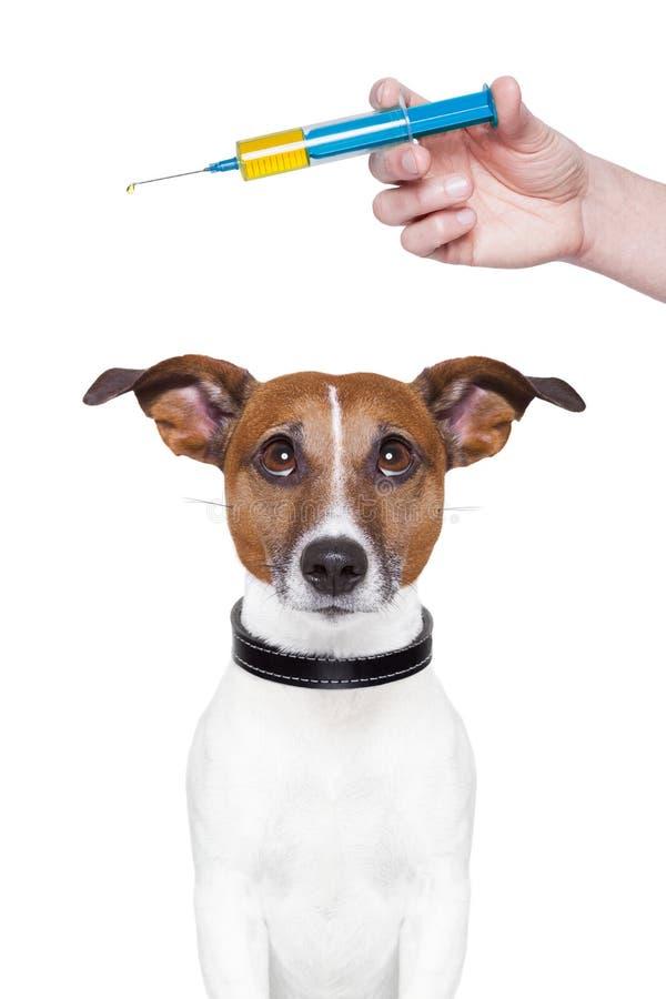 Hundeschutzimpfung lizenzfreie stockfotografie