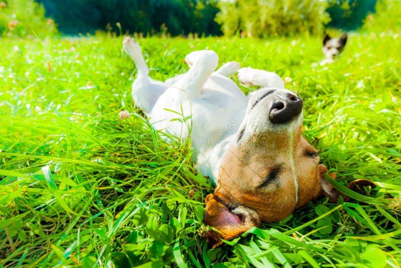 Hundesiesta am Park stockbild