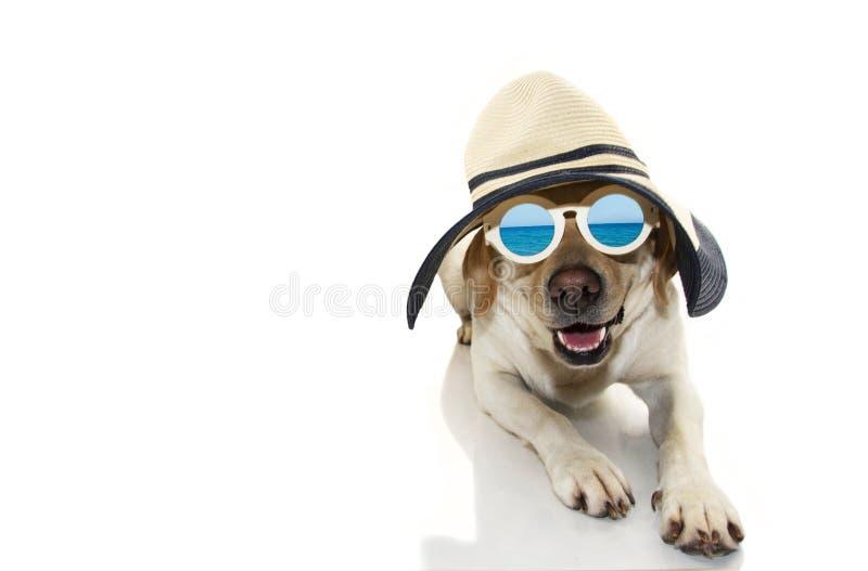 Hundesommer LABRADOR-WELPE, DER MIT SONNENBRILLE UND HUT GEKLEIDET WIRD, BEREITEN FÜR STRAND VOR LOKALISIERTER SCHUSS GEGEN WEISS stockfoto