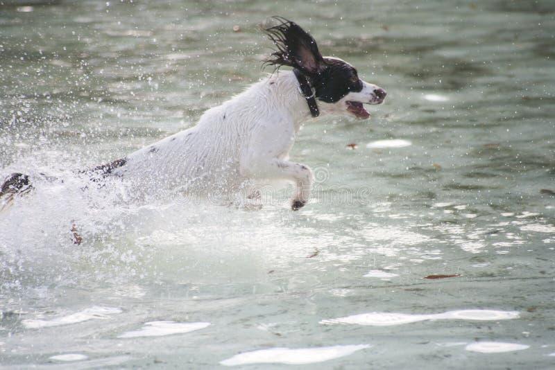 Hundespritzen stockbild