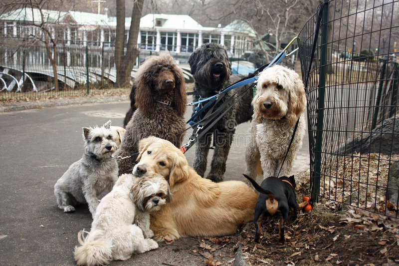 Hundetage lizenzfreie stockbilder