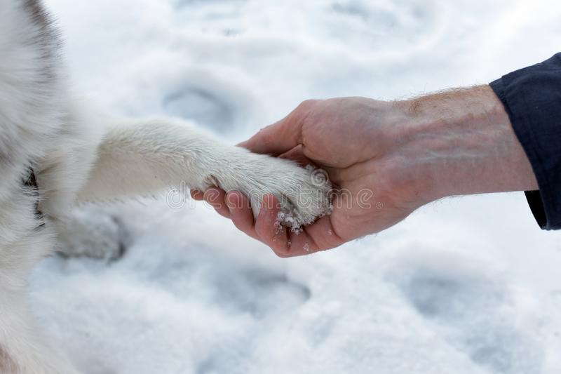 Hundetatze in einem menschlichen Arm stockbilder