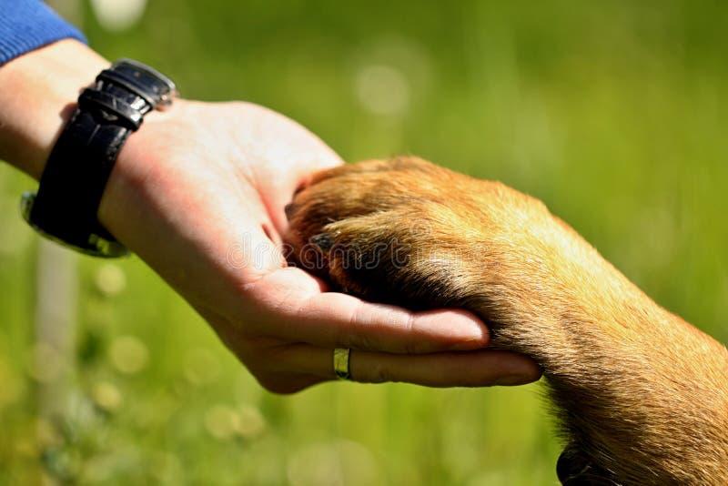 Hundetatze und Mannhand stockfotos
