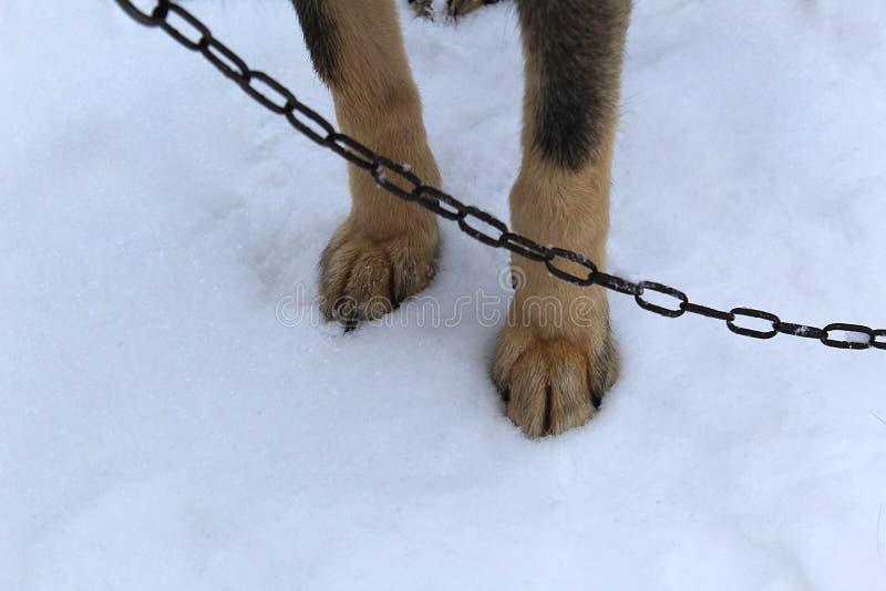 Hundetatzen auf dem Schnee im Winter stockbilder