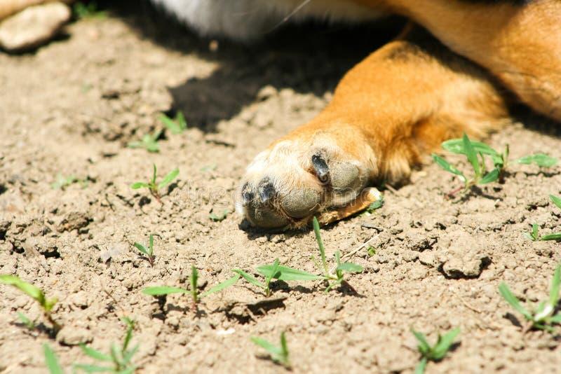 Hundetatzennahaufnahme stockbild