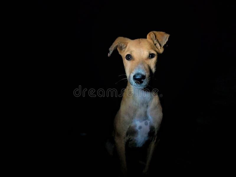 Hundeteddybär stockbilder