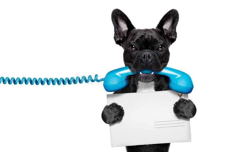 Hundetelefontelefon stockbilder