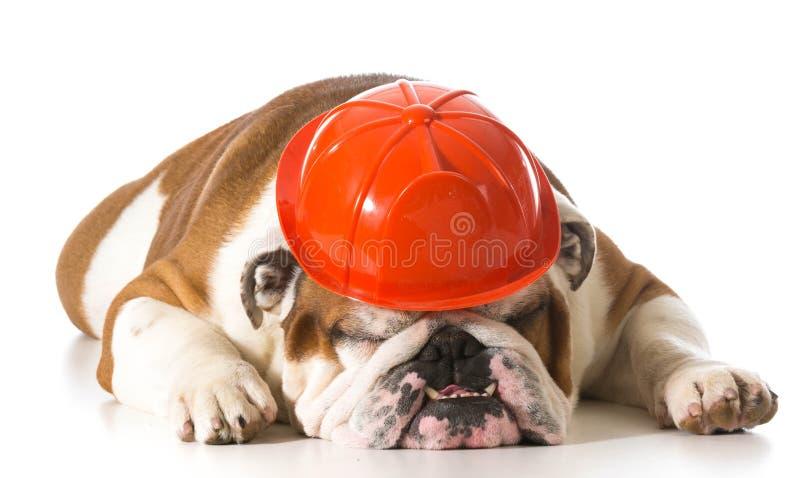 Hundetragender Feuerwehrmannhut lizenzfreies stockbild