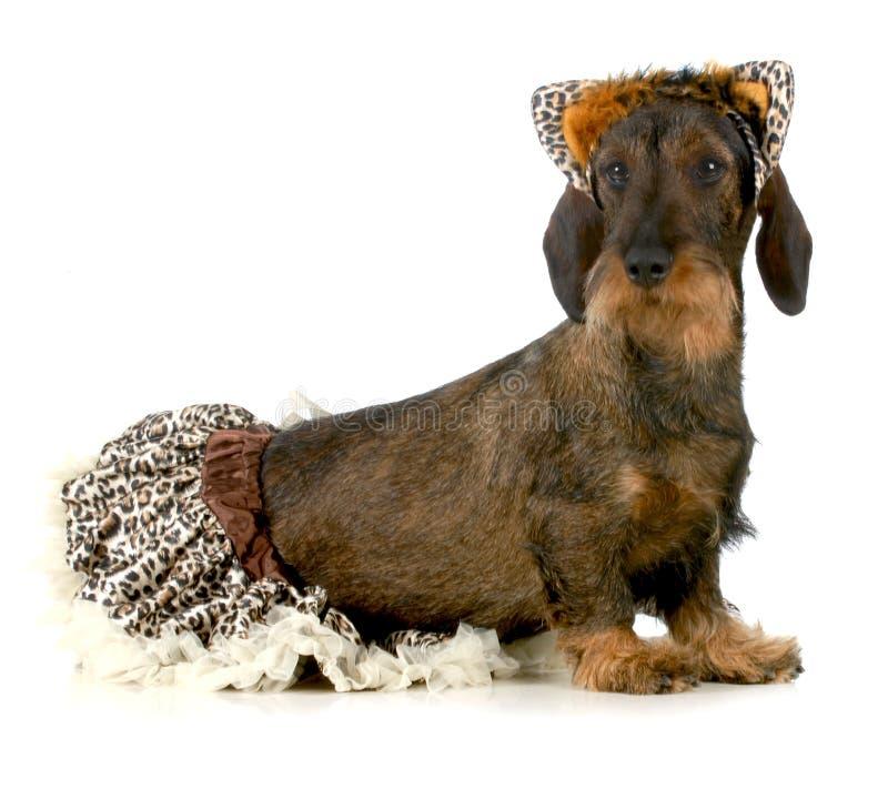 Hundetragendes Katzenkostüm lizenzfreies stockbild