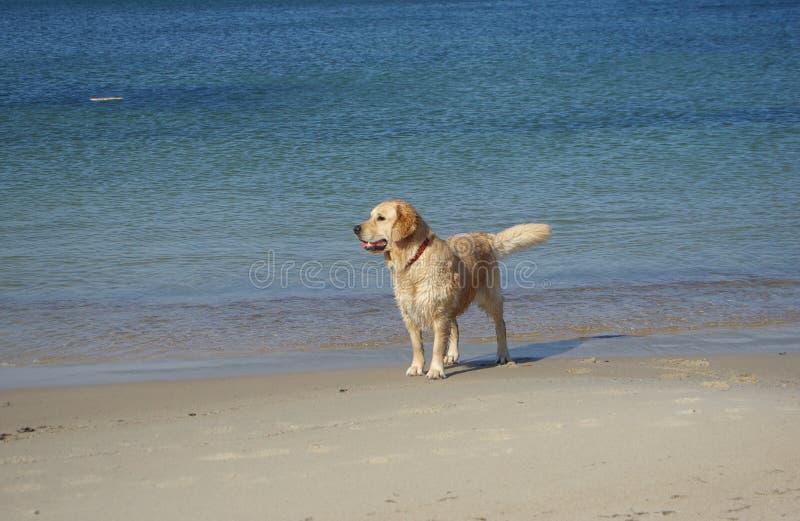 Hundeuhr lizenzfreie stockbilder