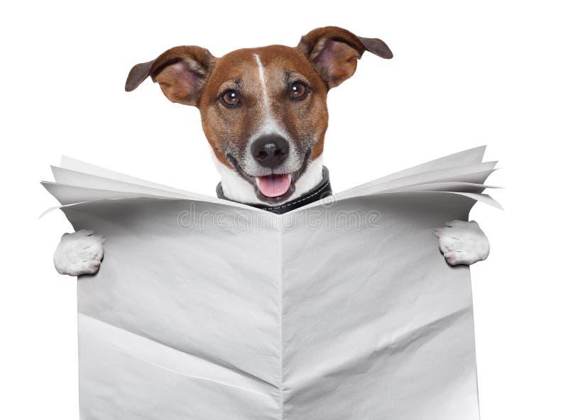 Hundeunbelegte Zeitung stockfoto