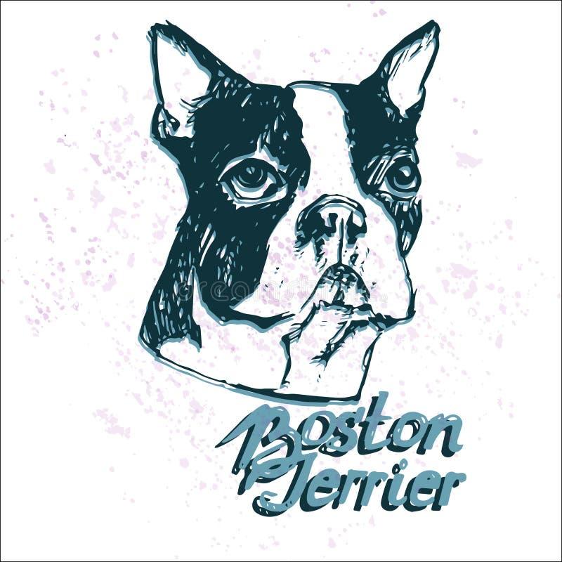 Hundevektorillustration Bostons Terrier stock abbildung