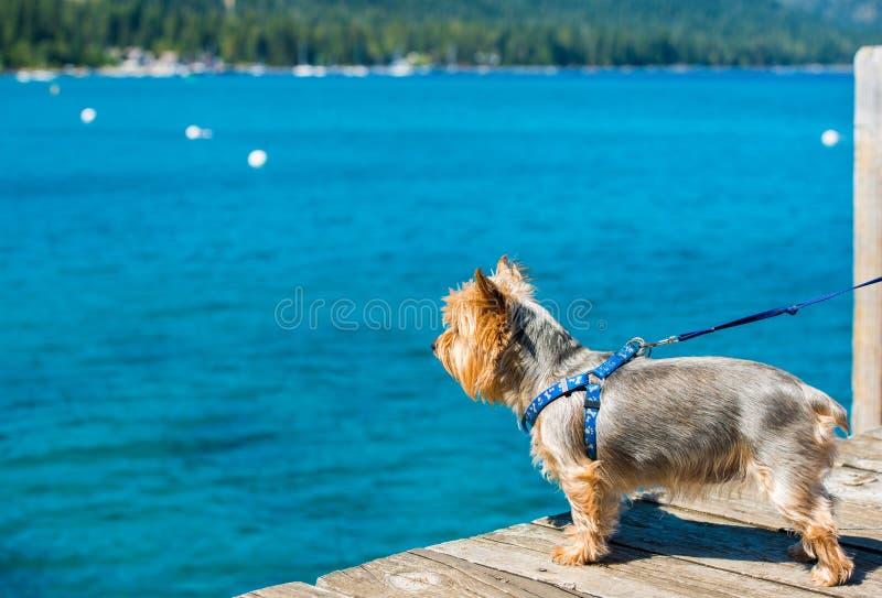 Hundeweg am See stockfotos