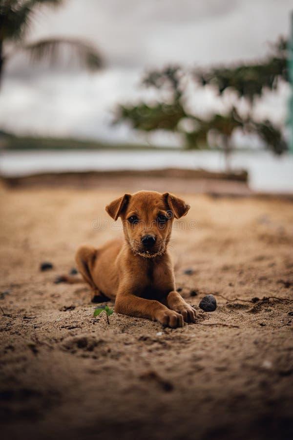 Hundewelpe auf dem Strand in den Philippinen lizenzfreie stockbilder