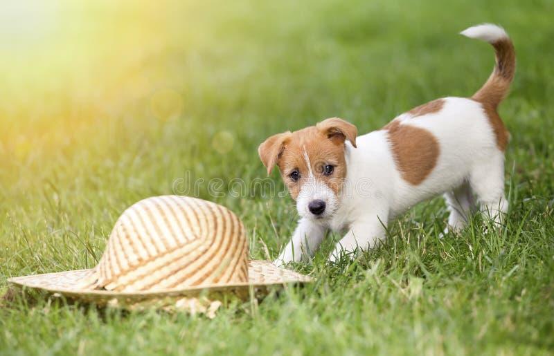 Hundewelpe, der im Sommer spielt stockbild