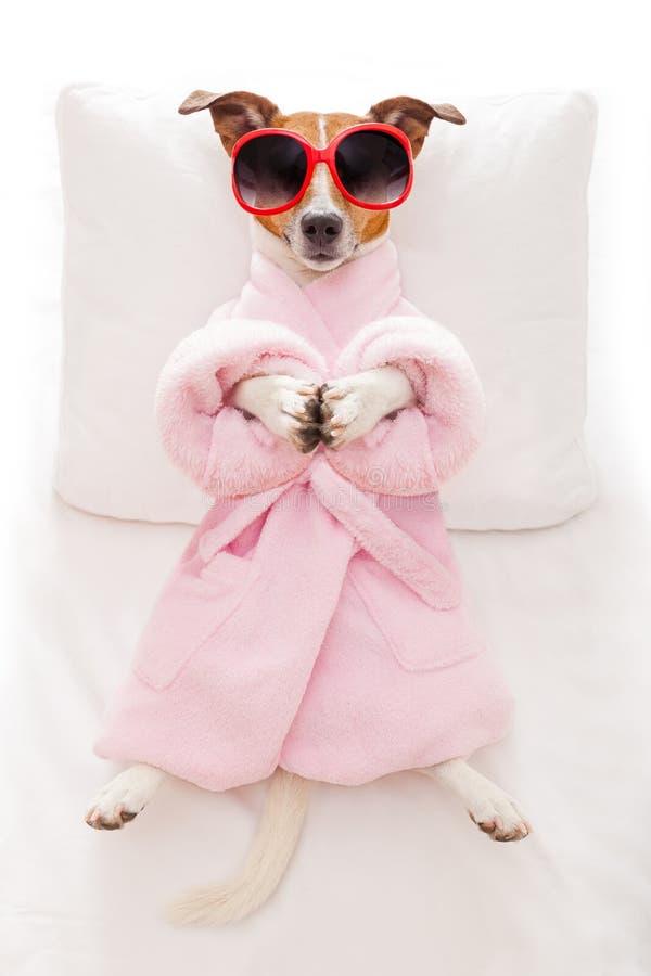 Hundeyogahaltung lizenzfreies stockbild