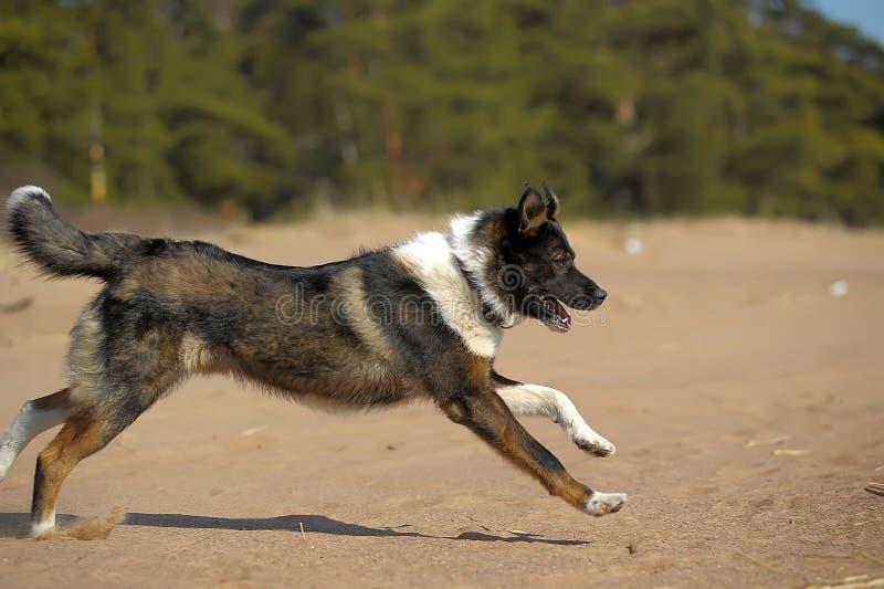 Hundezwinger auf dem Strand stockfotos