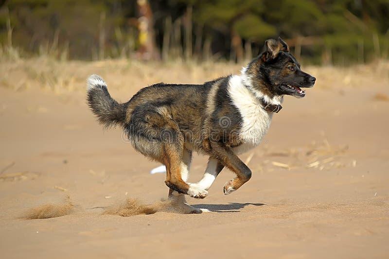 Hundezwinger auf dem Strand lizenzfreies stockbild